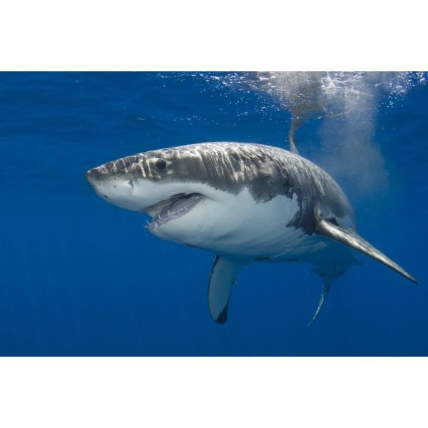 GO Healthy GO Shark Cartilage 750mg Capsules